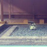 古湯温泉おんくりの足湯