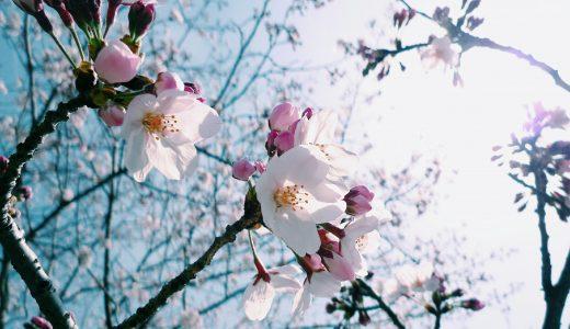 福岡城さくらまつりは、屋台もいいけど、舞鶴公園周辺のテイクアウトもオススメ!