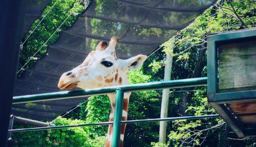 かわいい動物がいっぱい!一日中楽しめる福岡市動物園