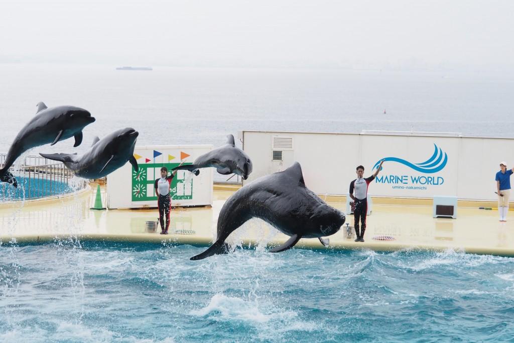 イルカ&クジラショー