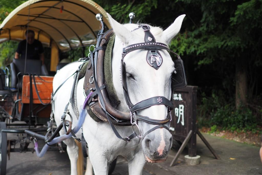 白馬のユキちゃん