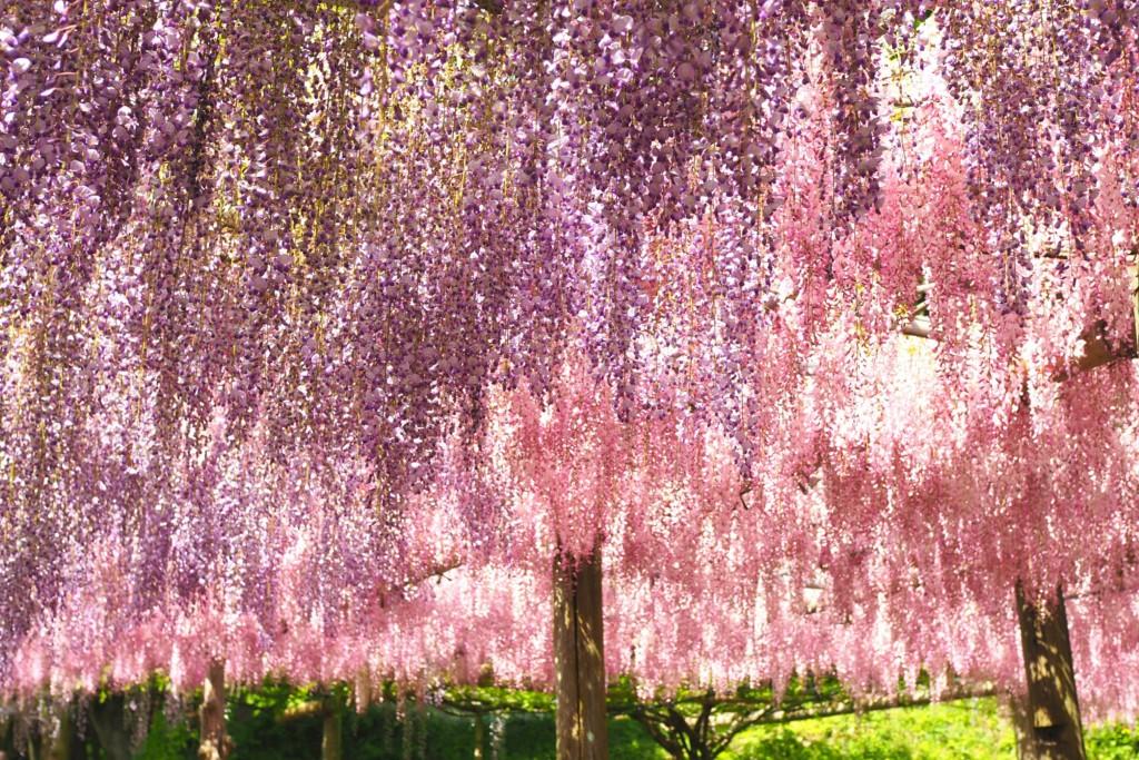 紫とピンク