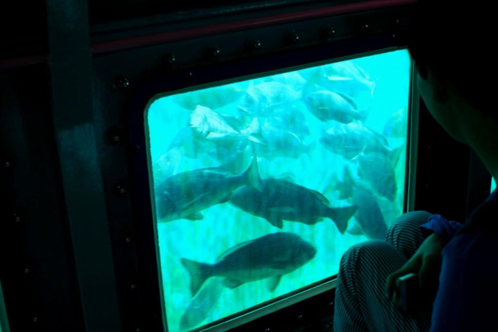 大きな魚がうじょうじょ