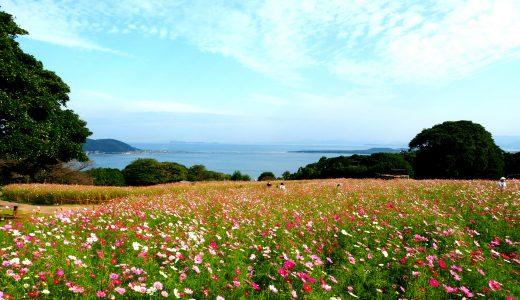 能古島の遊び方 – コスモスを見に行こう|のこのしまアイランドパーク