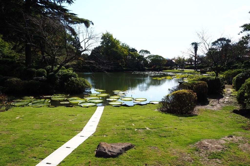 大鬼蓮の庭園