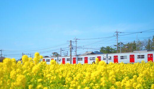 電車と菜の花