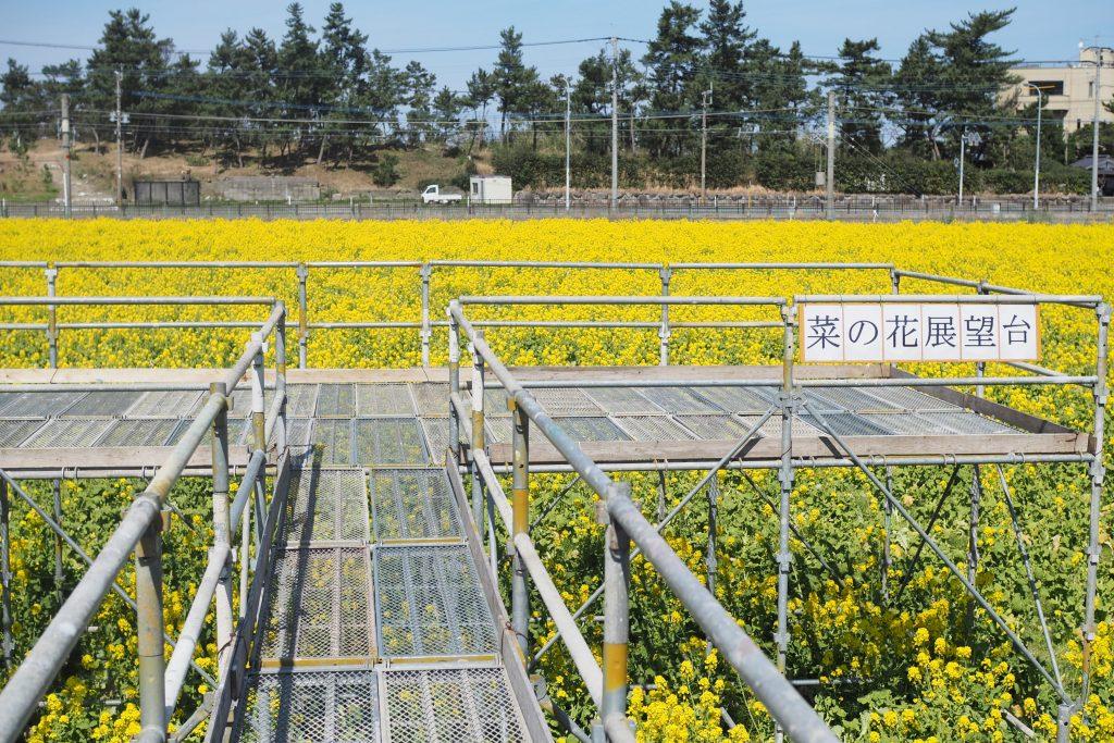 菜の花展望台