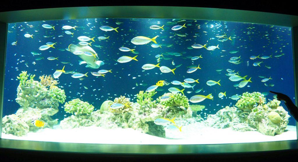 カラフルなサンゴと魚たち
