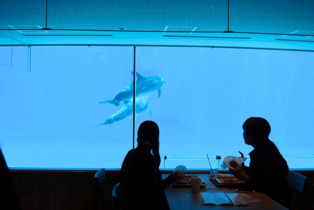 イルカを見ながらランチ