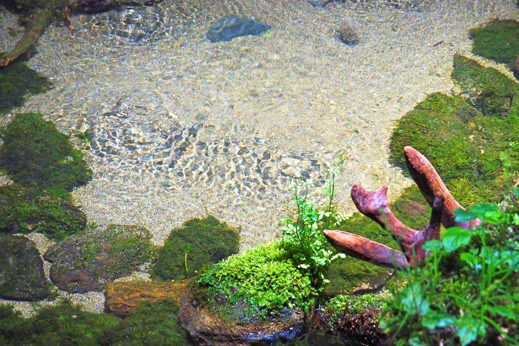 阿蘇の湧き水