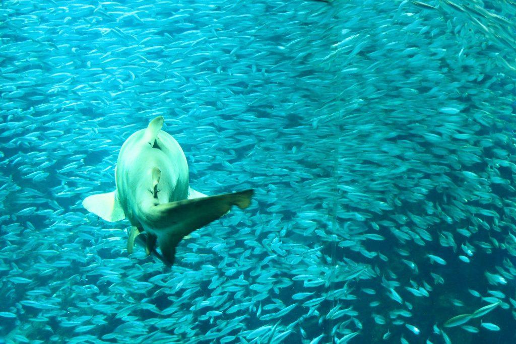イワシとサメ
