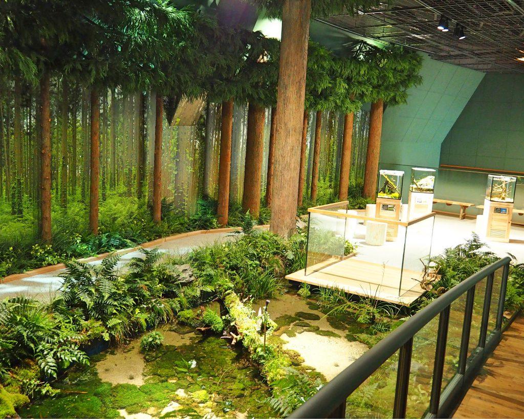 阿蘇 水の森