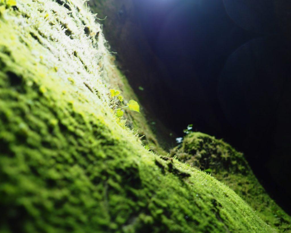 鍾乳洞の中の植物