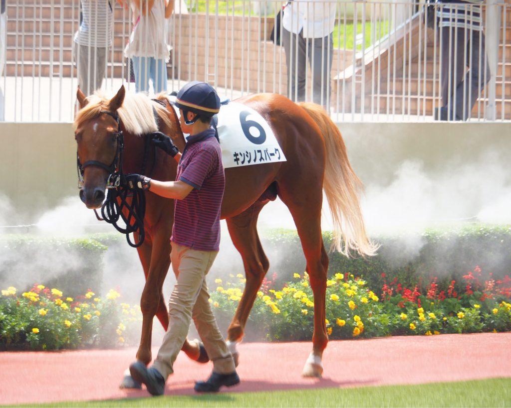 パドックの競走馬