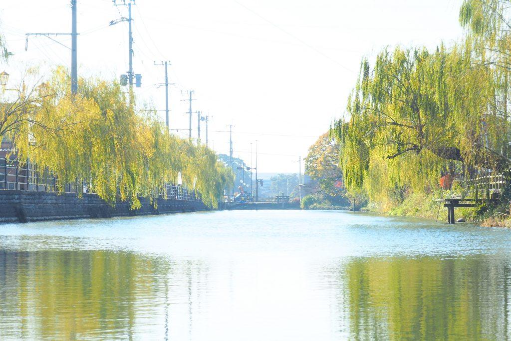 柳の木が美しい