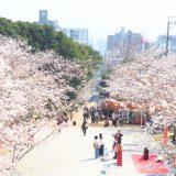 桜と参道と街並み