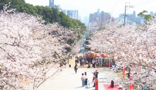 【西公園お花見ガイド】日本さくら名所100選は福岡でここだけ!