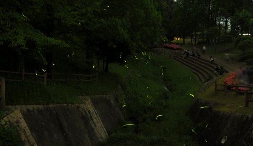 福津市 ほたるの里(本木川自然公園)で幻想的なホタル観賞