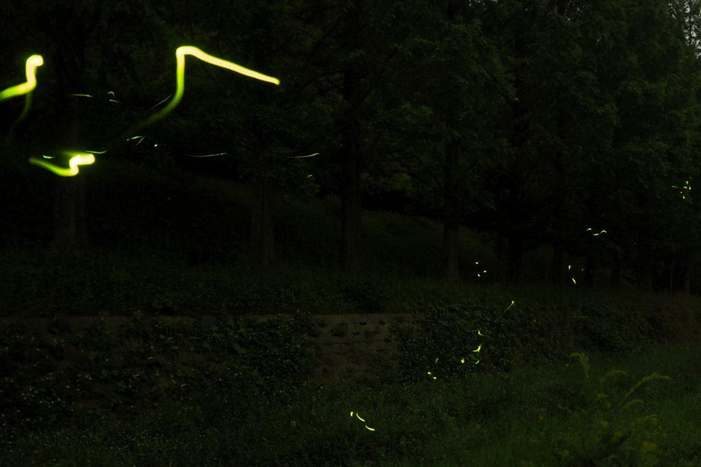 ホタルの強い光