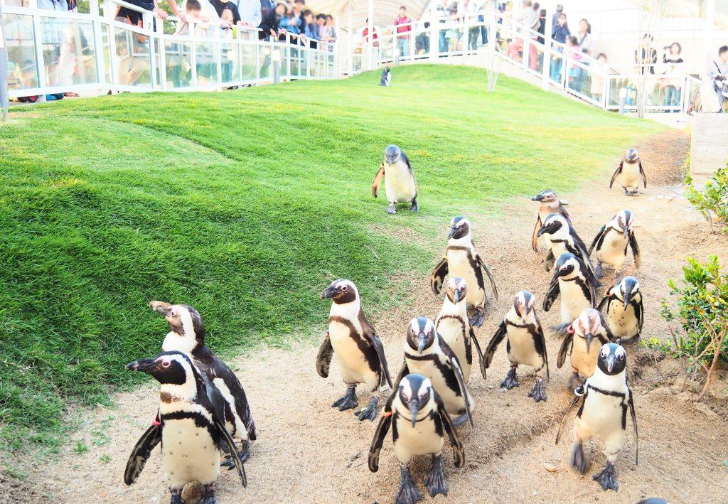 ペンギンの丘