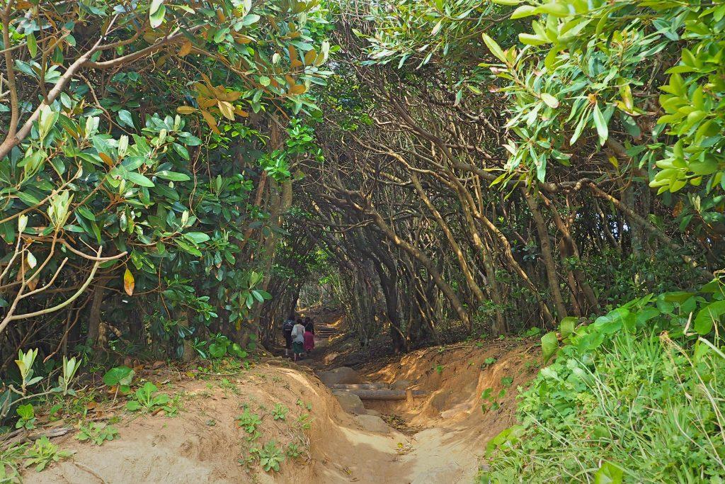 トトロの森の入口付近