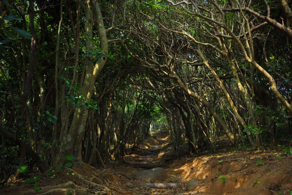 糸島のトトロの森