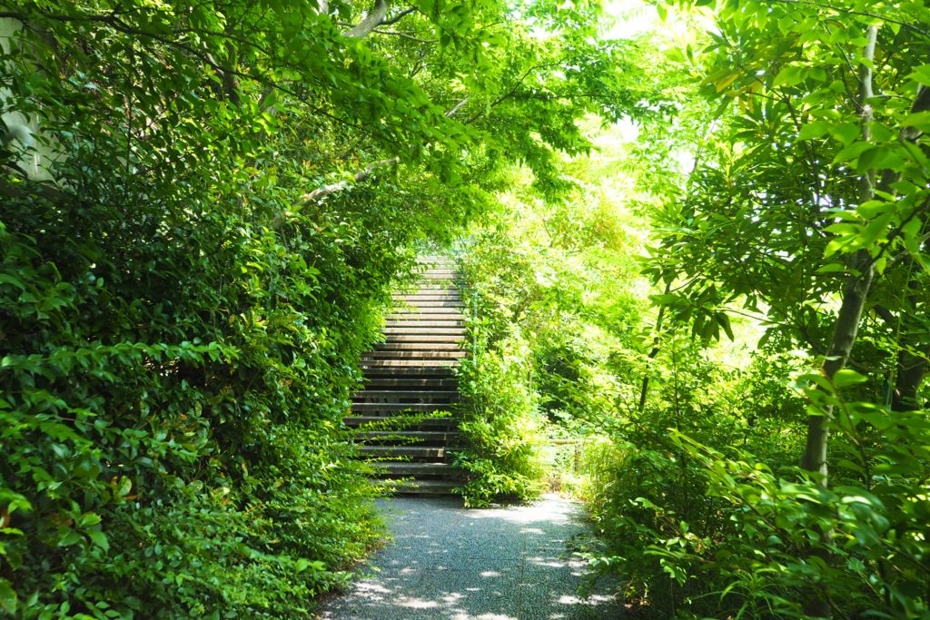 緑に覆われた階段