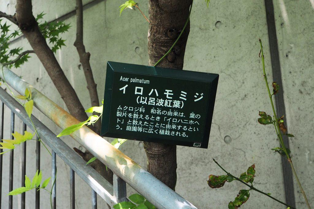 植物の解説文