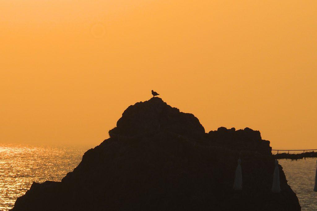 夫婦岩の鳥