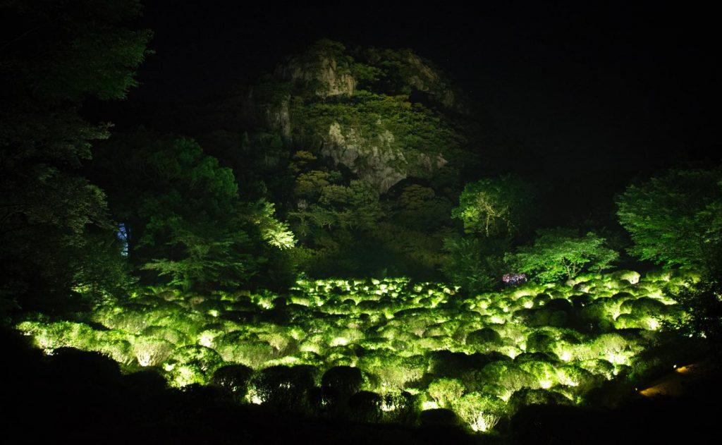 生命は連続する光 - ツツジ谷
