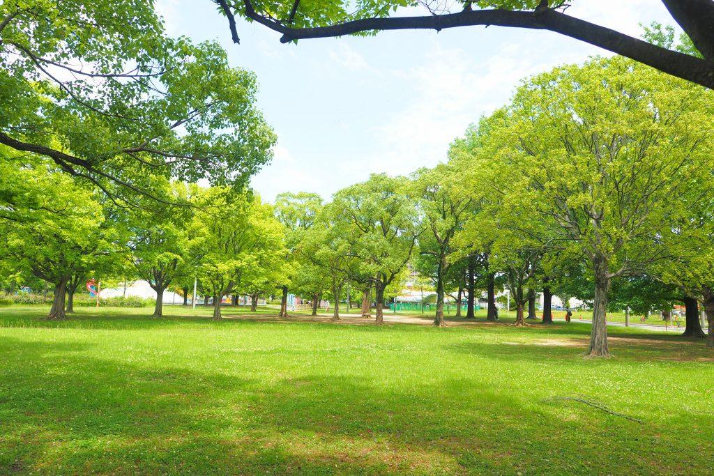 芝生エリアの心地いい木陰