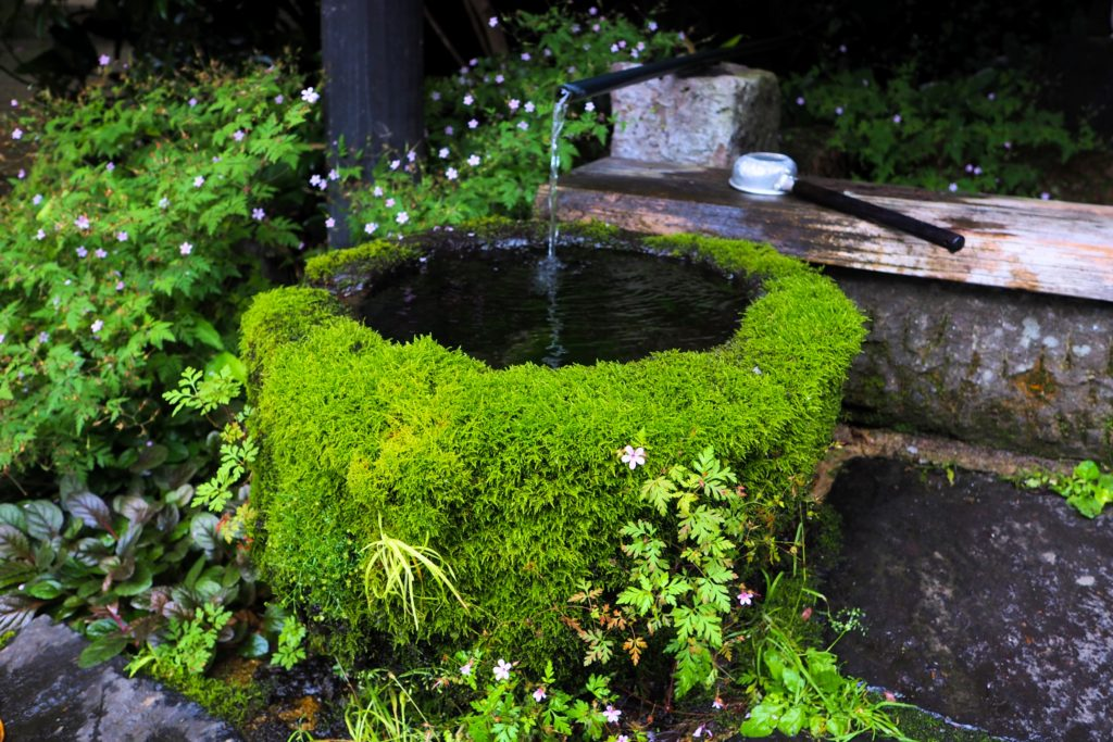美しい苔の緑