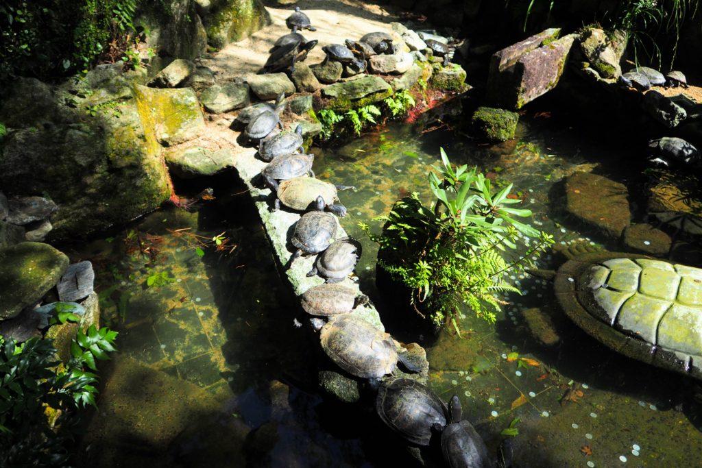 ずらりと並ぶ亀