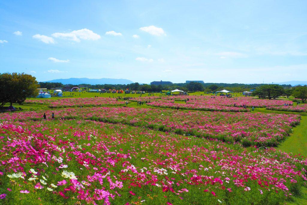 花の丘の上から
