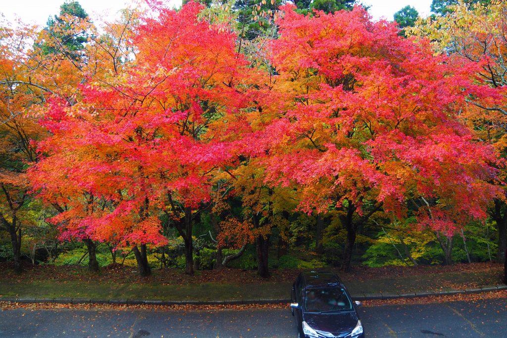 高住神社駐車場の紅葉