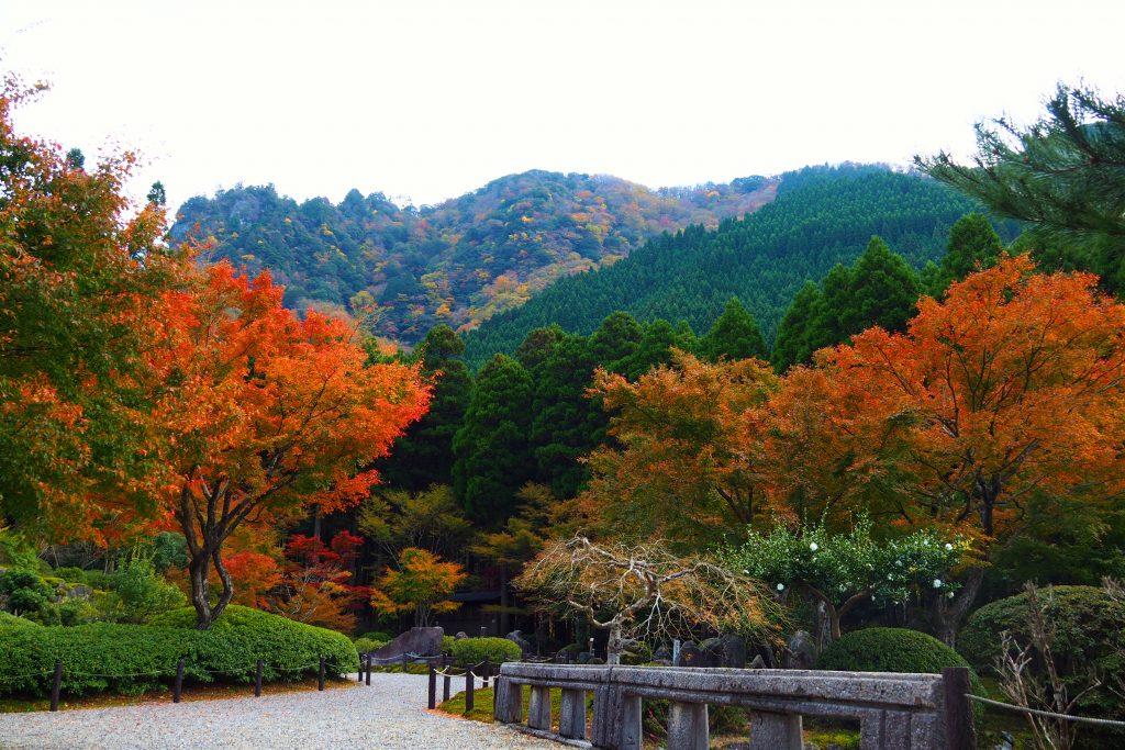 山の紅葉を望むことも