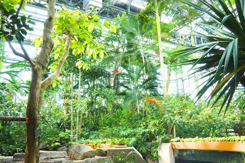 熱帯生態園の館内