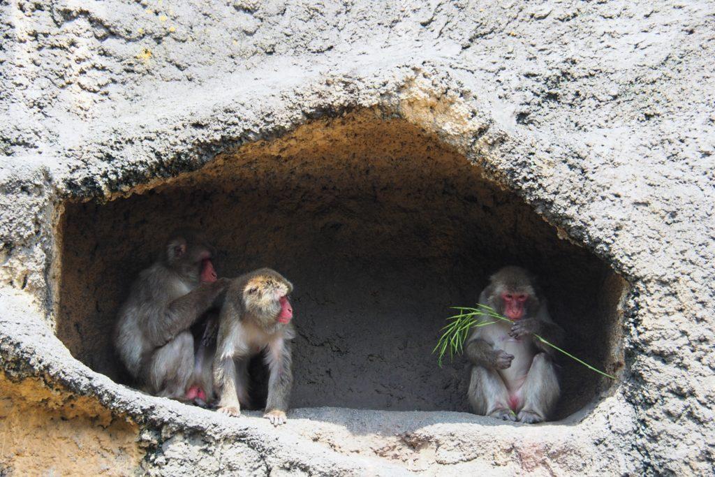 到津の森公園の猿