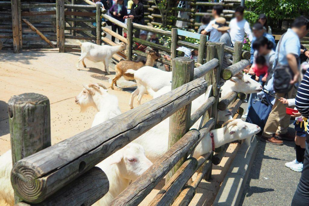 到津の森公園のふれあい体験