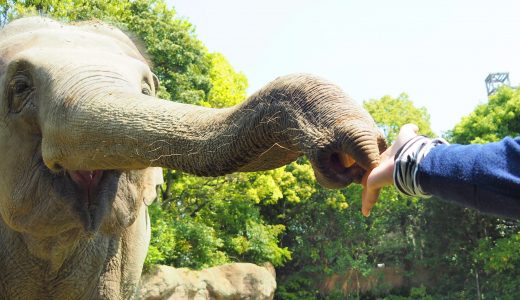 到津の森公園でゾウに餌やり