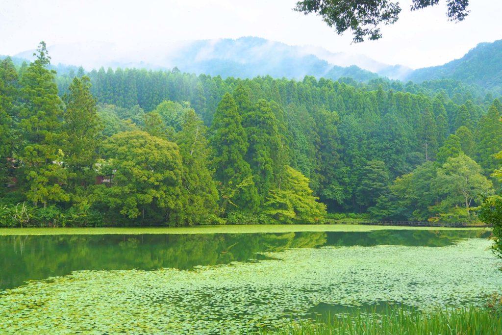 池の山キャンプ場の朝